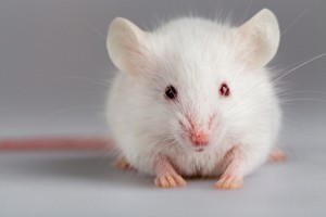 Swiss researchers successfully induced spontaneous erections in lab rats with a novel gene construct that begins to work when exposed to blue light.