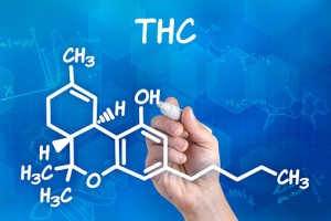 THC, the psychoactive component in marijuana, may desensitize some nerve and muscle tissues in the penis, making it more difficult to get and keep an erection.