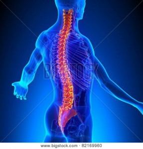 The spinal cord and the network of nerves that branch off it play a key role in almost every function of the human body, including sexual function.