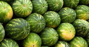 Why Watermelon Might Be the Most Important Item on Your Shopping List