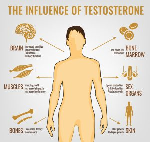 The influence of testosterone.