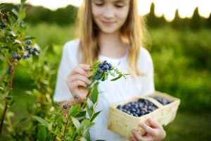 Young teen picking blueberries.