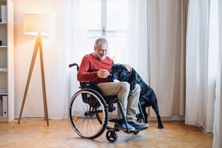 Man in a wheelchair with his dog